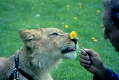 S'apprivoiser chien lion
